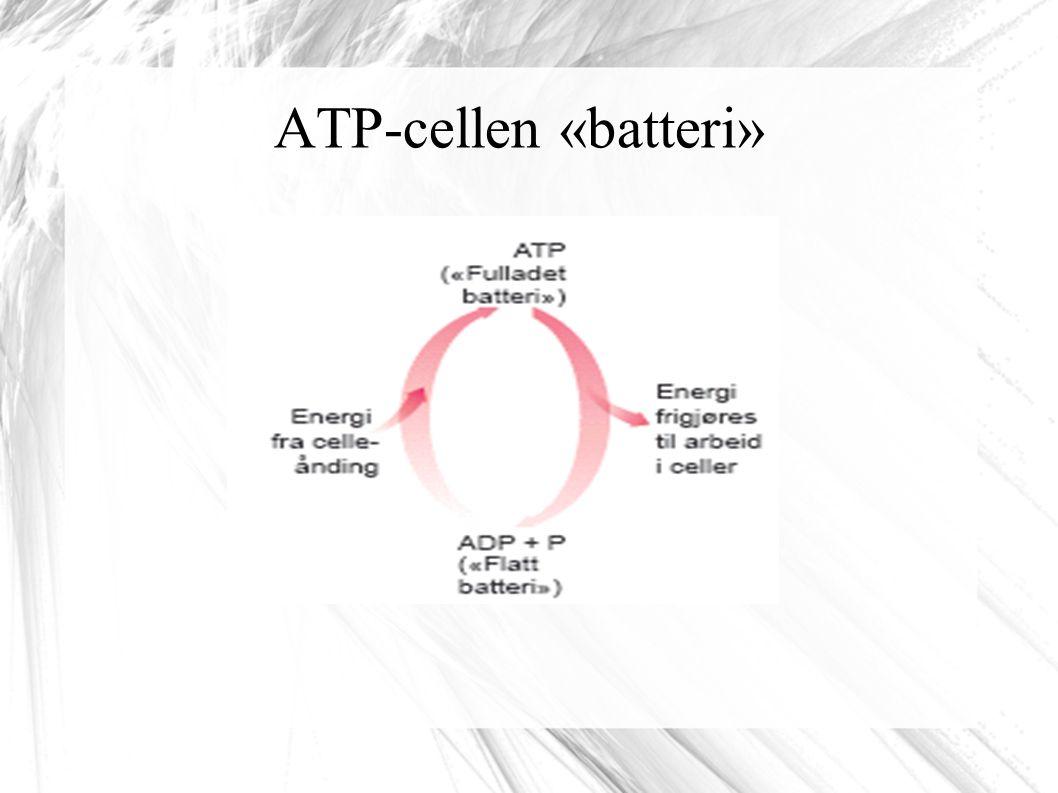 ATP-cellen «batteri»