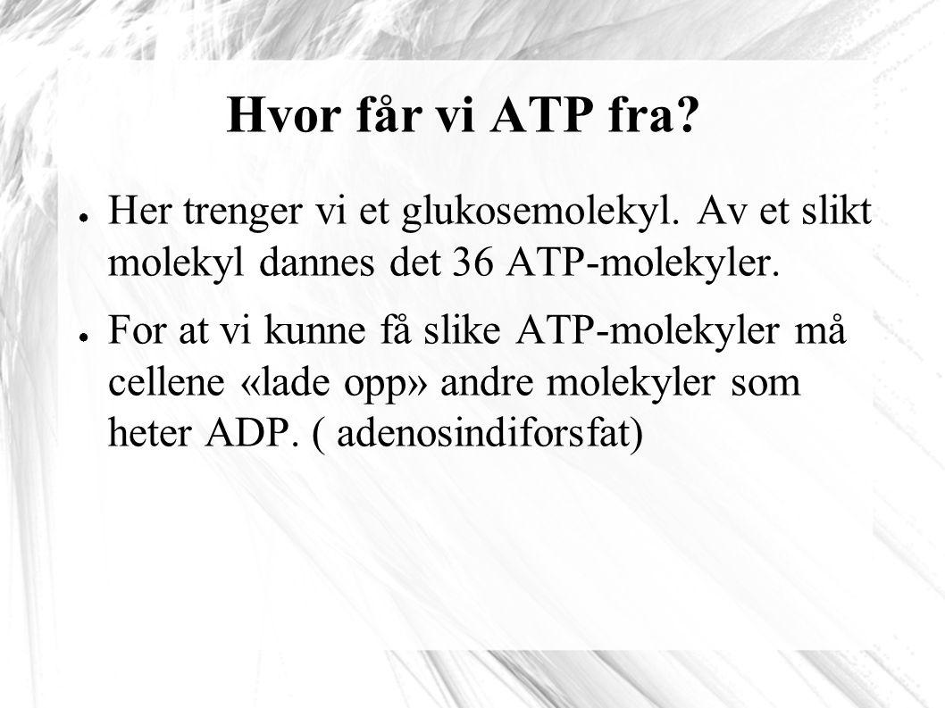Hvor får vi ATP fra.● Her trenger vi et glukosemolekyl.