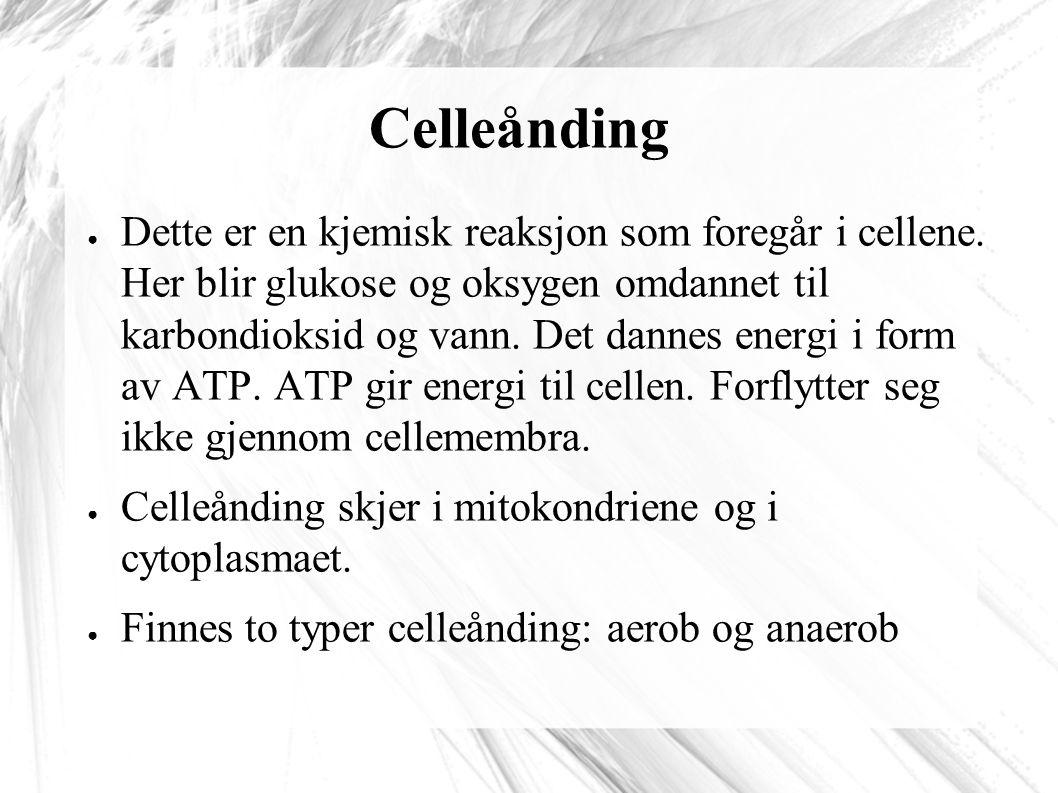 Celleånding ● Dette er en kjemisk reaksjon som foregår i cellene.
