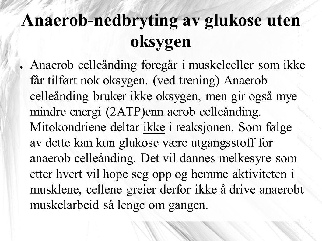 Anaerob-nedbryting av glukose uten oksygen ● Anaerob celleånding foregår i muskelceller som ikke får tilført nok oksygen.