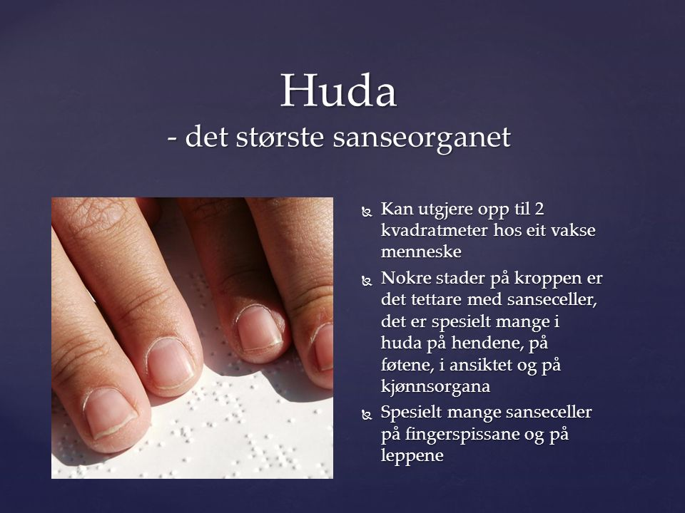  Kan utgjere opp til 2 kvadratmeter hos eit vakse menneske  Nokre stader på kroppen er det tettare med sanseceller, det er spesielt mange i huda på hendene, på føtene, i ansiktet og på kjønnsorgana  Spesielt mange sanseceller på fingerspissane og på leppene Huda - det største sanseorganet