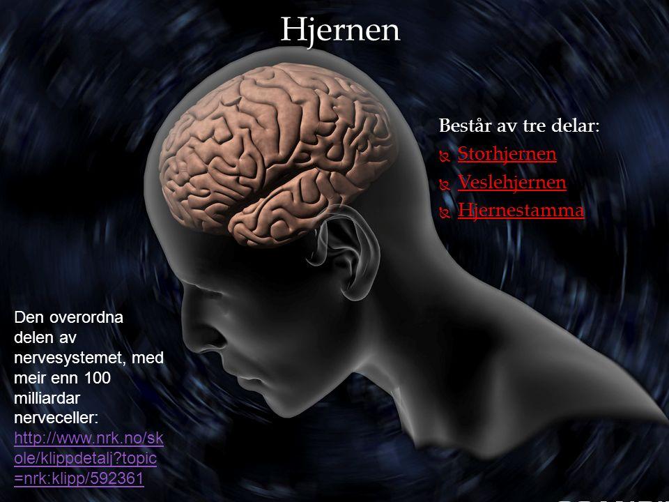 Består av tre delar:  Storhjernen  Veslehjernen  Hjernestamma Hjernen Den overordna delen av nervesystemet, med meir enn 100 milliardar nerveceller: http://www.nrk.no/sk ole/klippdetalj topic =nrk:klipp/592361