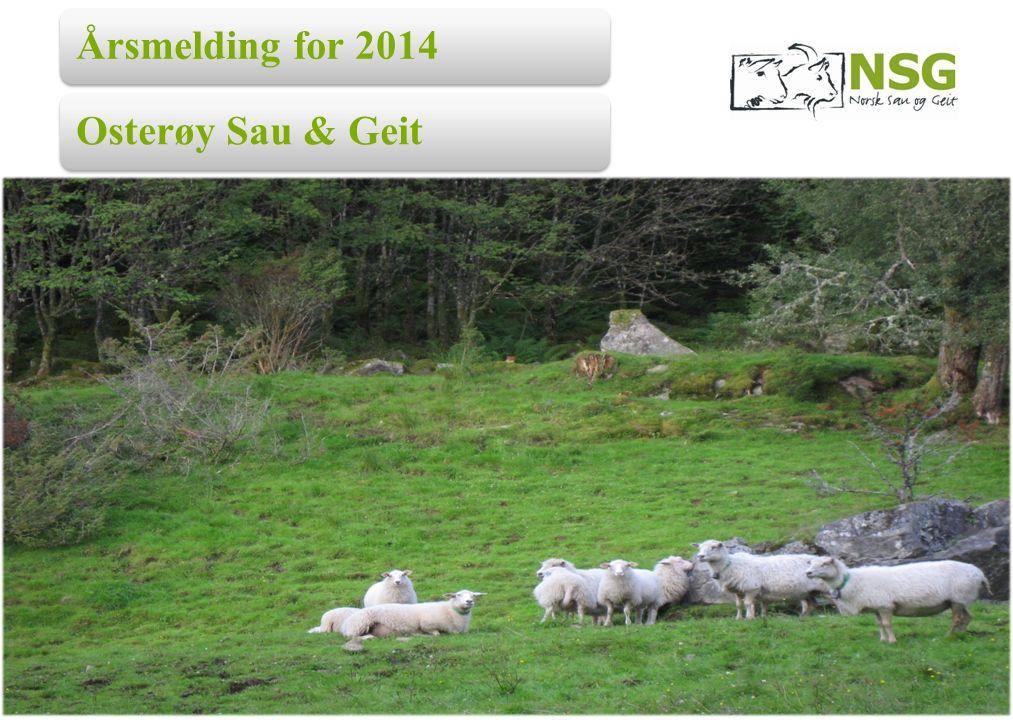 Årsmelding for 2014Osterøy Sau & Geit