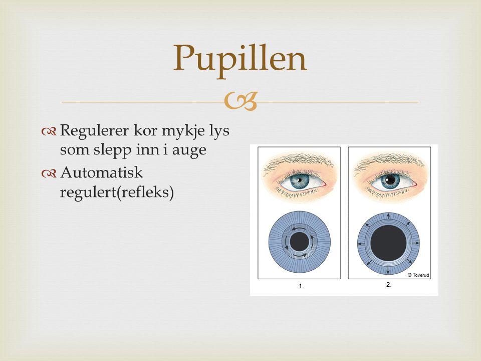  Pupillen  Regulerer kor mykje lys som slepp inn i auge  Automatisk regulert(refleks)