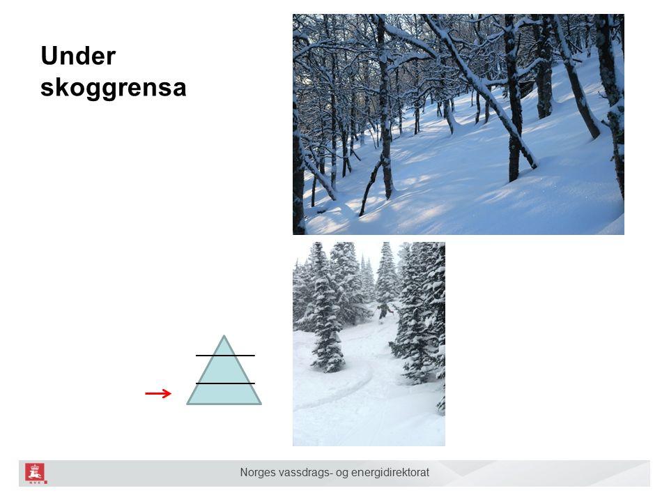 Norges vassdrags- og energidirektorat Under skoggrensa