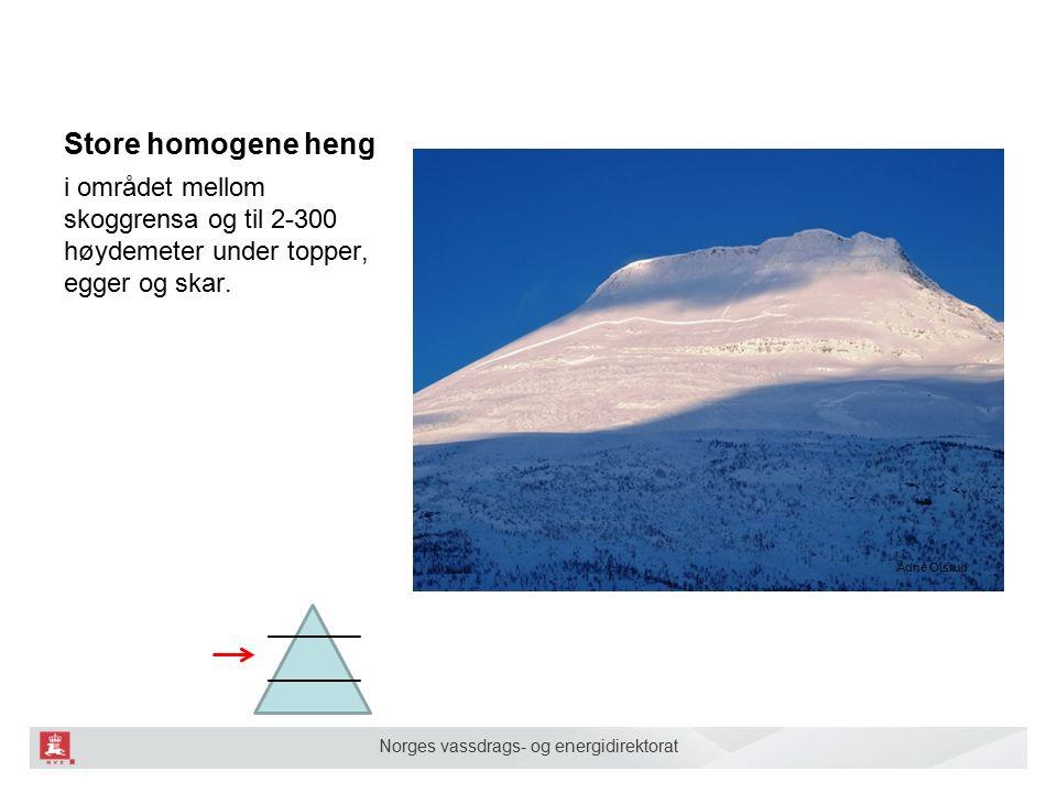 Norges vassdrags- og energidirektorat Store homogene heng i området mellom skoggrensa og til 2-300 høydemeter under topper, egger og skar.