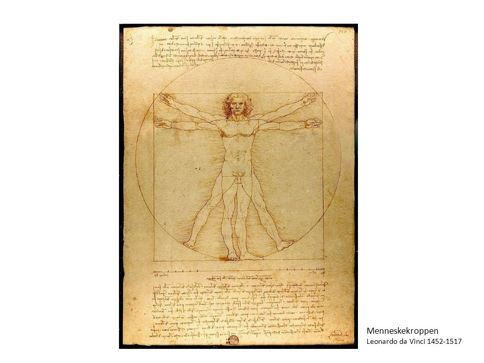 Menneskekroppen Leonardo da Vinci 1452-1517