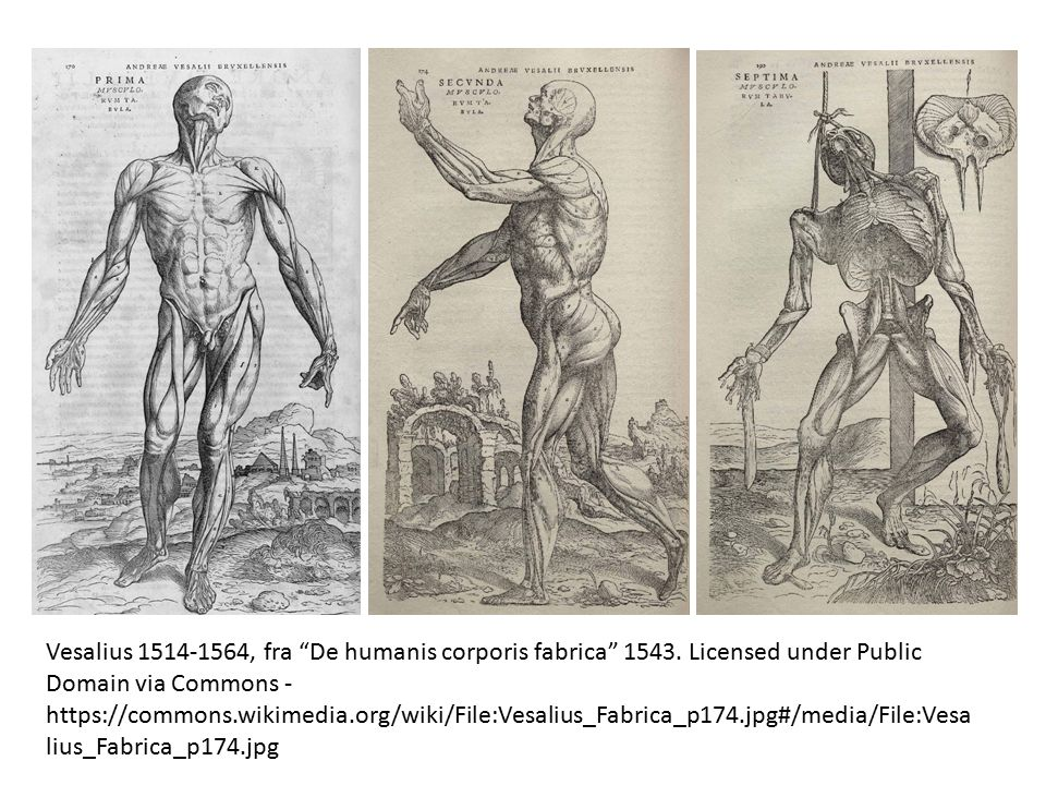 "Vesalius 1514-1564, fra ""De humanis corporis fabrica"" 1543. Licensed under Public Domain via Commons - https://commons.wikimedia.org/wiki/File:Vesaliu"