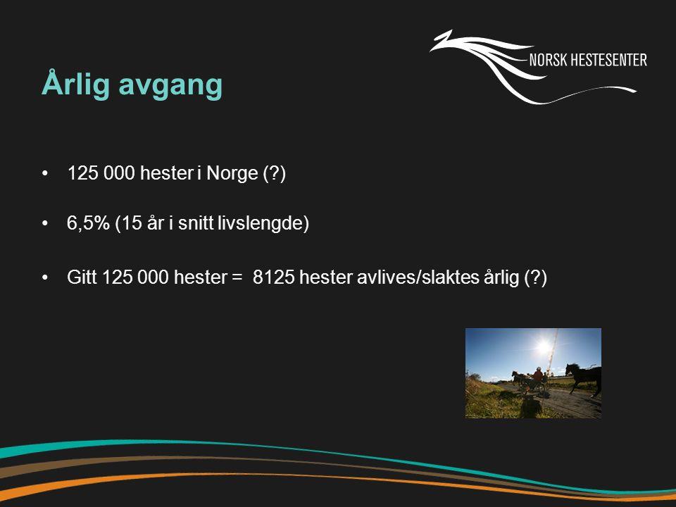 Årlig avgang 125 000 hester i Norge (?) 6,5% (15 år i snitt livslengde) Gitt 125 000 hester = 8125 hester avlives/slaktes årlig (?)
