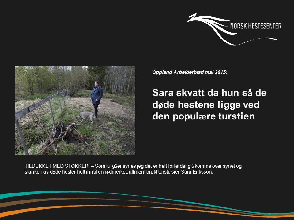 Oppland Arbeiderblad mai 2015: Sara skvatt da hun s å de d ø de hestene ligge ved den popul æ re turstien TILDEKKET MED STOKKER: – Som turg å er synes