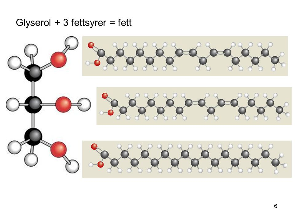 Glyserol + 3 fettsyrer = fett 6