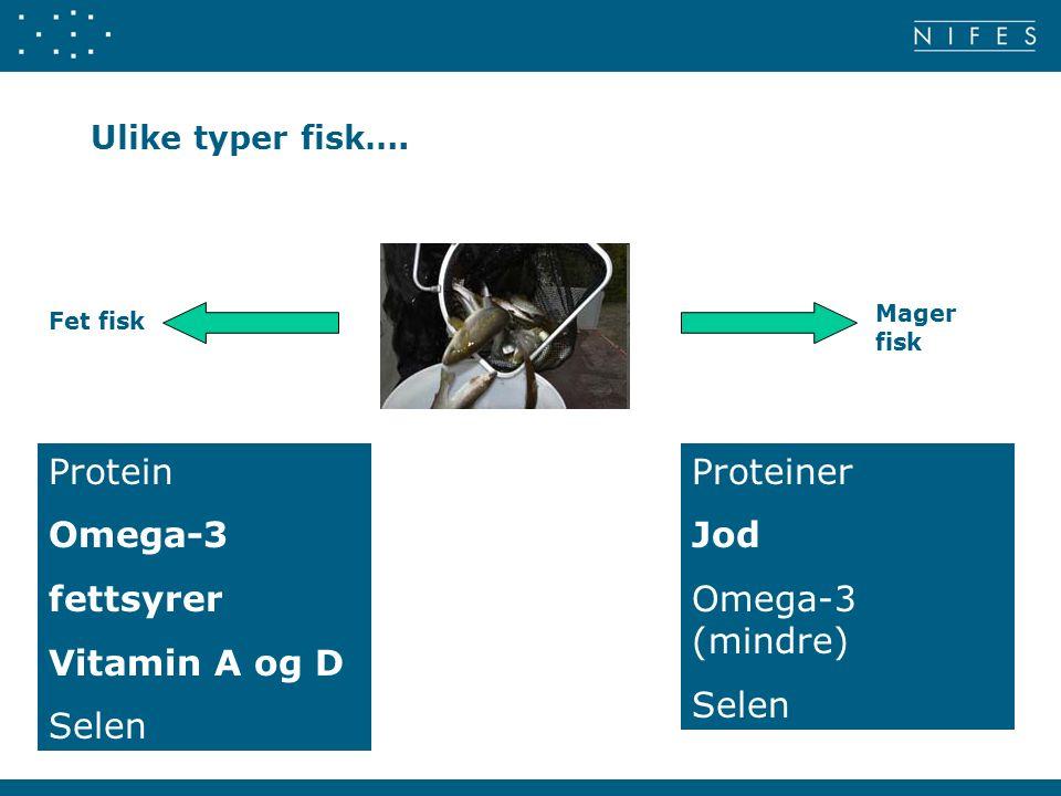 Ulike typer fisk….