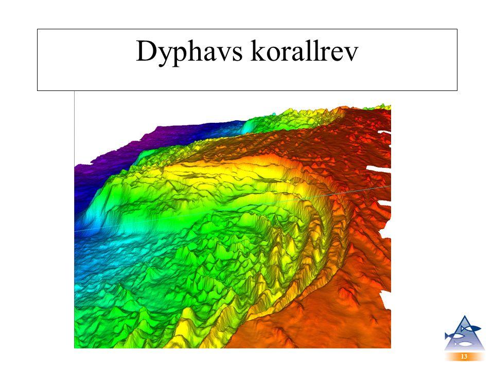 13 Dyphavs korallrev