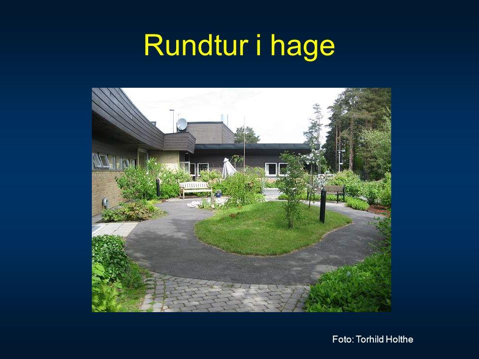 Rundtur i hage Foto: Torhild Holthe