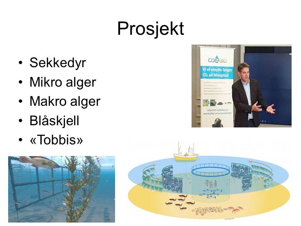Prosjekt Sekkedyr Mikro alger Makro alger Blåskjell «Tobbis»