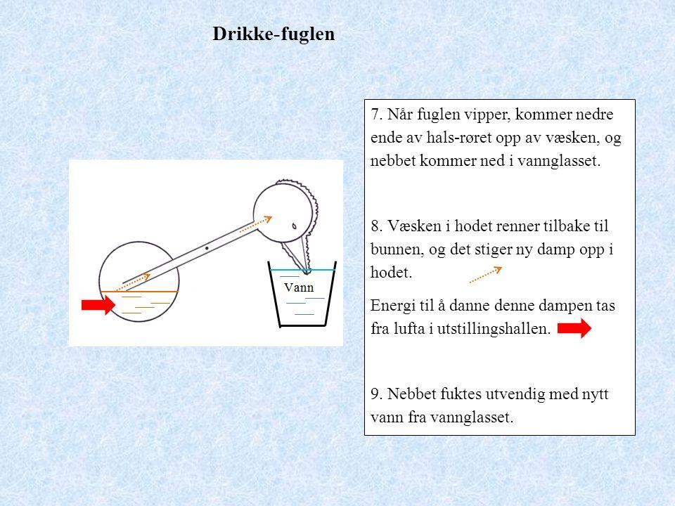 Drikke-fuglen 7.