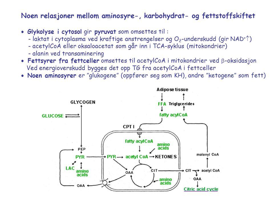 Noen relasjoner mellom aminosyre-, karbohydrat- og fettstoffskiftet  Glykolyse i cytosol gir pyruvat som omsettes til : - laktat i cytoplasma ved kraftige anstrengelser og O 2 -underskudd (gir NAD +  ) - acetylCoA eller oksaloacetat som går inn i TCA-syklus (mitokondrier) - alanin ved transaminering  Fettsyrer fra fettceller omsettes til acetylCoA i mitokondrier ved  -oksidasjon Ved energioverskudd bygges det opp TG fra acetylCoA i fettceller  Noen aminosyrer er glukogene (oppfører seg som KH), andre ketogene som fett)