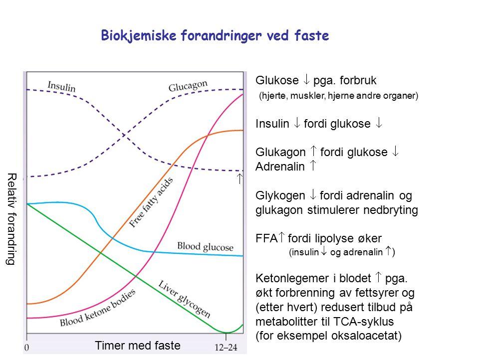Timer med faste Relativ forandring Biokjemiske forandringer ved faste Glukose  pga.