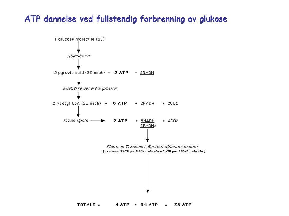 ATP dannelse ved fullstendig forbrenning av glukose