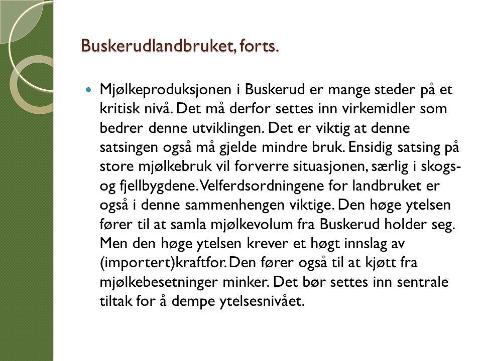Buskerudlandbruket, forts.Mjølkeproduksjonen i Buskerud er mange steder på et kritisk nivå.