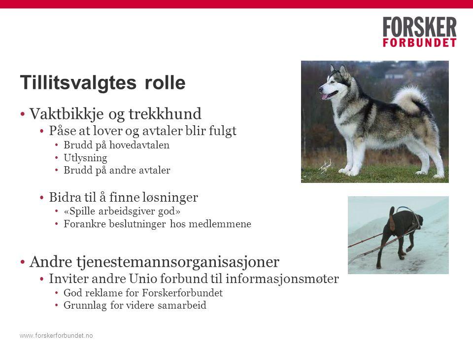 Tillitsvalgtes rolle Vaktbikkje og trekkhund Påse at lover og avtaler blir fulgt Brudd på hovedavtalen Utlysning Brudd på andre avtaler Bidra til å fi
