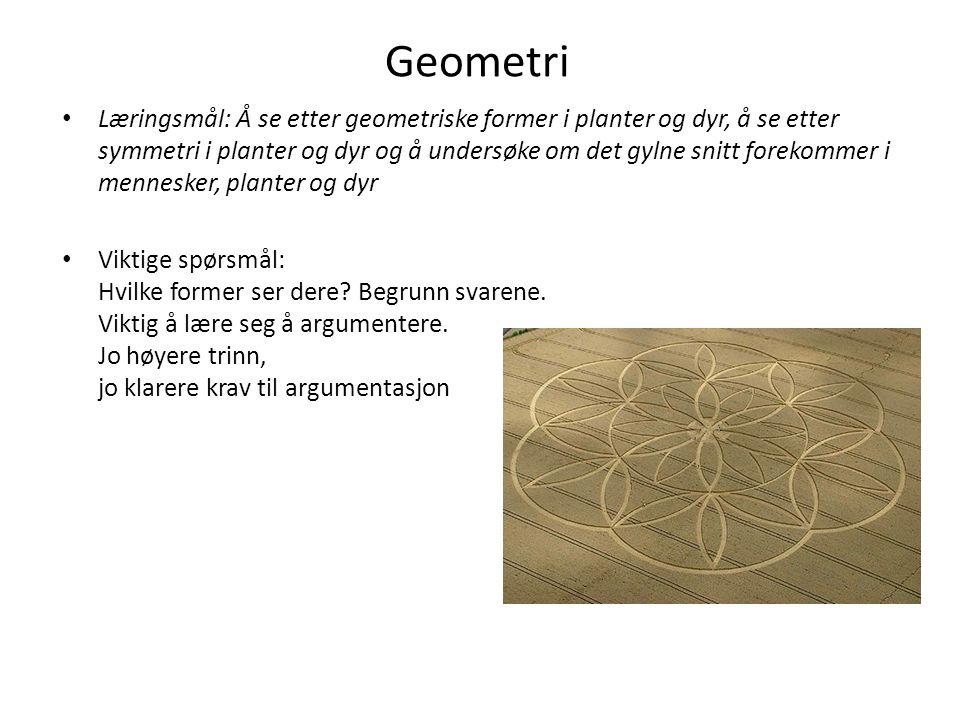 Geometri Læringsmål: Å se etter geometriske former i planter og dyr, å se etter symmetri i planter og dyr og å undersøke om det gylne snitt forekommer