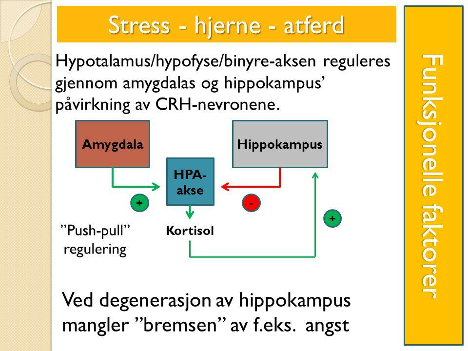 Funksjonelle faktorer Stress - hjerne - atferd Ved degenerasjon av hippokampus mangler bremsen av f.eks.