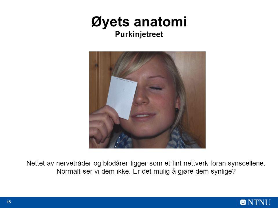 15 Øyets anatomi Purkinjetreet Nettet av nervetråder og blodårer ligger som et fint nettverk foran synscellene.