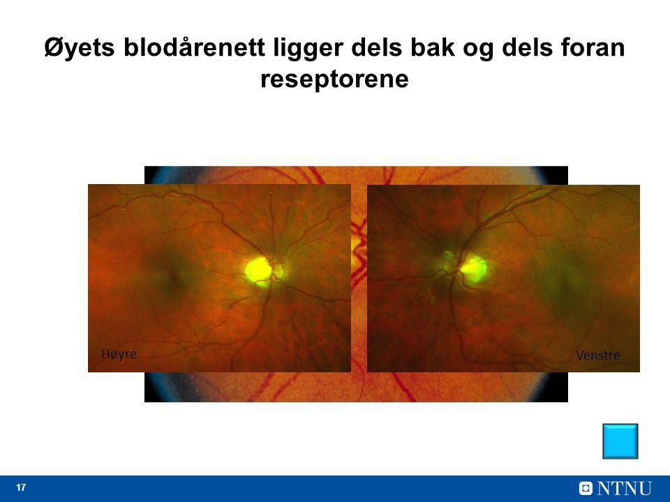 17 Øyets blodårenett ligger dels bak og dels foran reseptorene Venstre Høyre