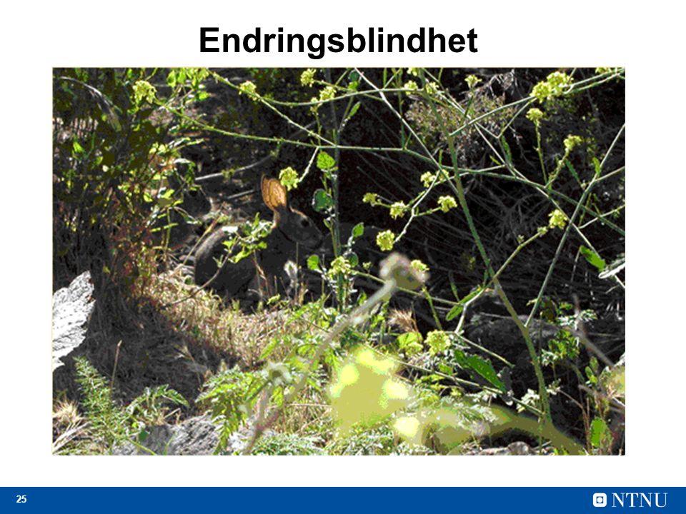 25 Endringsblindhet