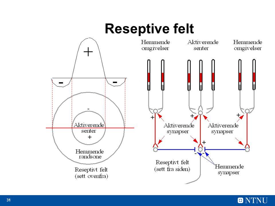 31 Reseptive felt