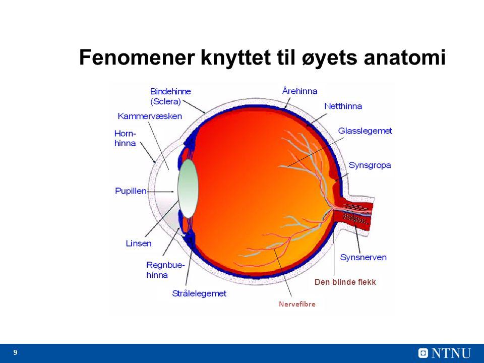 20 Informasjonsstrømmen slås av idet øyet flytter seg I praksis er vi blinde ca.