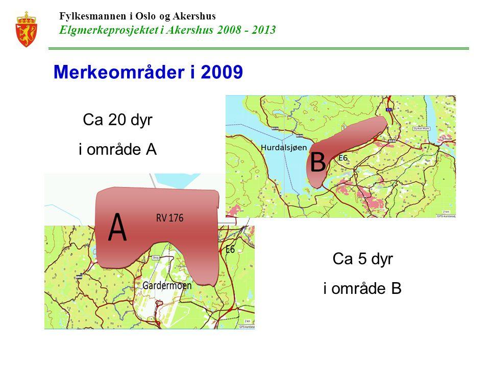 Fylkesmannen i Oslo og Akershus Elgmerkeprosjektet i Akershus 2008 - 2013 Merkeområder i 2009 Ca 20 dyr i område A Ca 5 dyr i område B