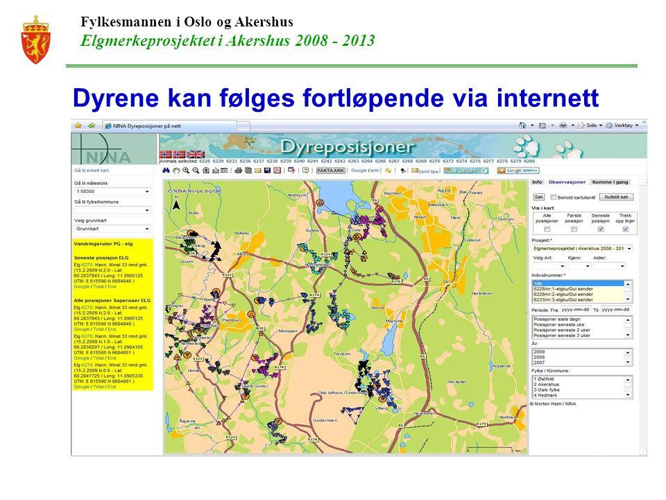 Fylkesmannen i Oslo og Akershus Elgmerkeprosjektet i Akershus 2008 - 2013 Dyrene kan følges fortløpende via internett