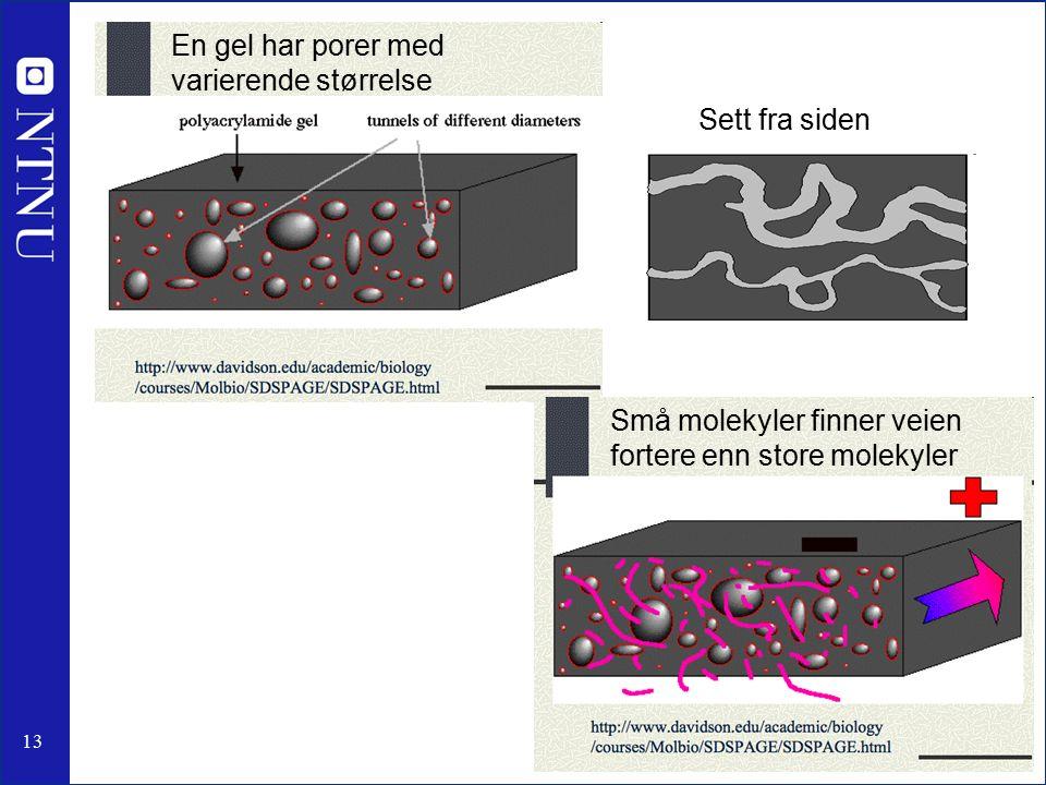 13 Små molekyler finner veien fortere enn store molekyler En gel har porer med varierende størrelse Sett fra siden
