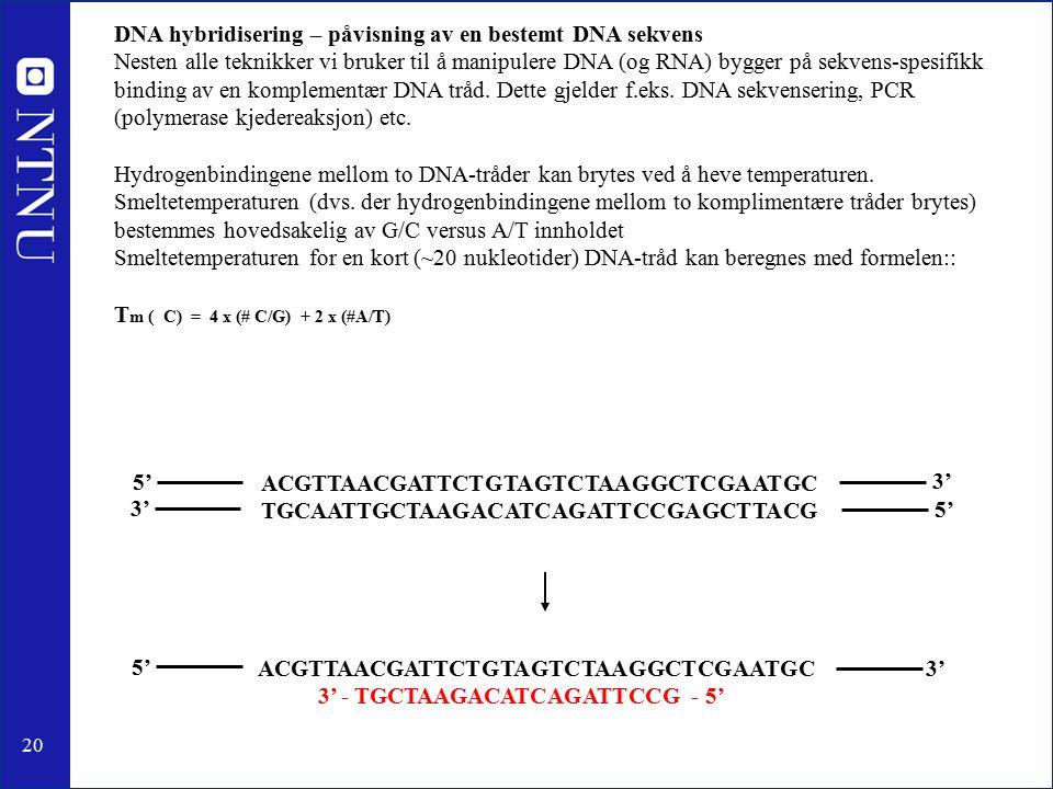 20 ACGTTAACGATTCTGTAGTCTAAGGCTCGAATGC 3' 3' - TGCTAAGACATCAGATTCCG - 5' ACGTTAACGATTCTGTAGTCTAAGGCTCGAATGC TGCAATTGCTAAGACATCAGATTCCGAGCTTACG 5' 3' DNA hybridisering – påvisning av en bestemt DNA sekvens Nesten alle teknikker vi bruker til å manipulere DNA (og RNA) bygger på sekvens-spesifikk binding av en komplementær DNA tråd.