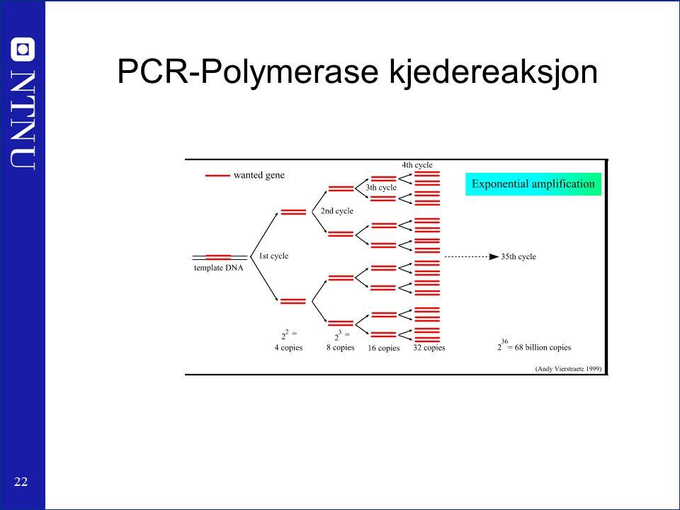 22 PCR-Polymerase kjedereaksjon