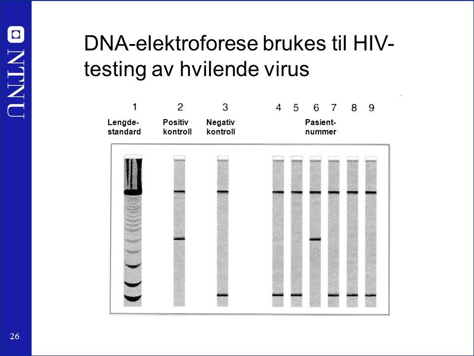 26 Lengde- standard Positiv kontroll Negativ kontroll Pasient- nummer DNA-elektroforese brukes til HIV- testing av hvilende virus