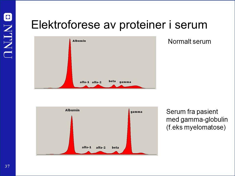 37 Elektroforese av proteiner i serum Normalt serum Serum fra pasient med gamma-globulin (f.eks myelomatose)