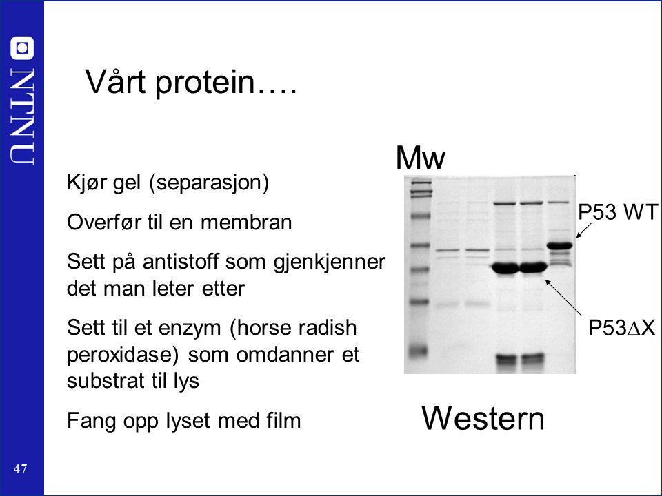 47 Vårt protein….