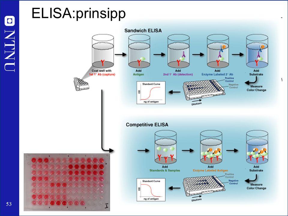 53 ELISA:prinsipp
