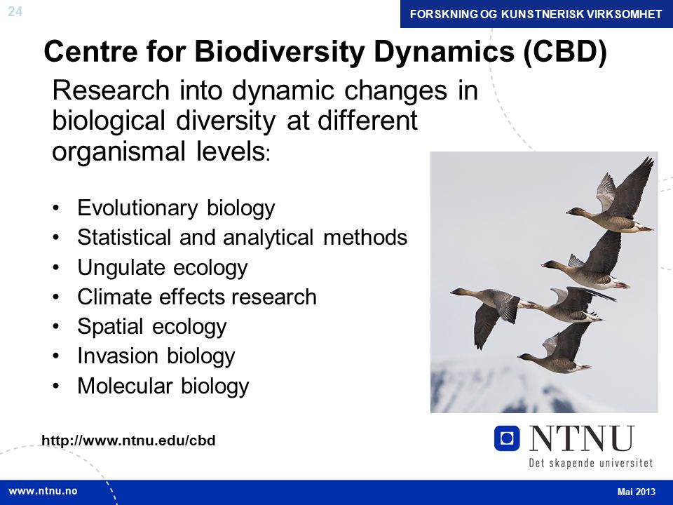 24 Centre for Biodiversity Dynamics (CBD) Research into dynamic changes in biological diversity at different organismal levels : Evolutionary biology