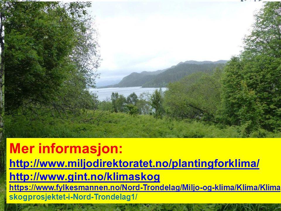 Prosjektet kan finansiere : Miljøregistrering Rydding Markberedning Plantekjøp/planting Ressurser til å finne felt Supplering/etterarbeid i 5 år Mer informasjon: http://www.miljodirektoratet.no/plantingforklima/ http://www.gint.no/klimaskog https://www.fylkesmannen.no/Nord-Trondelag/Miljo-og-klima/Klima/Klima skogprosjektet-i-Nord-Trondelag1/