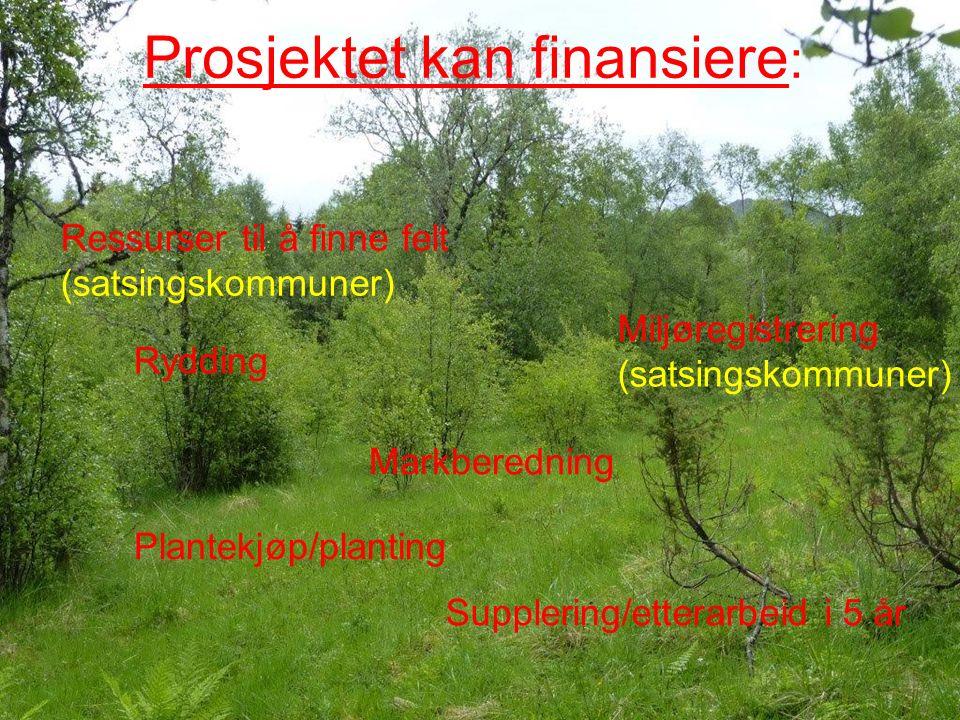Prosjektet kan finansiere : Miljøregistrering (satsingskommuner) Rydding Markberedning Plantekjøp/planting Ressurser til å finne felt (satsingskommuner) Supplering/etterarbeid i 5 år