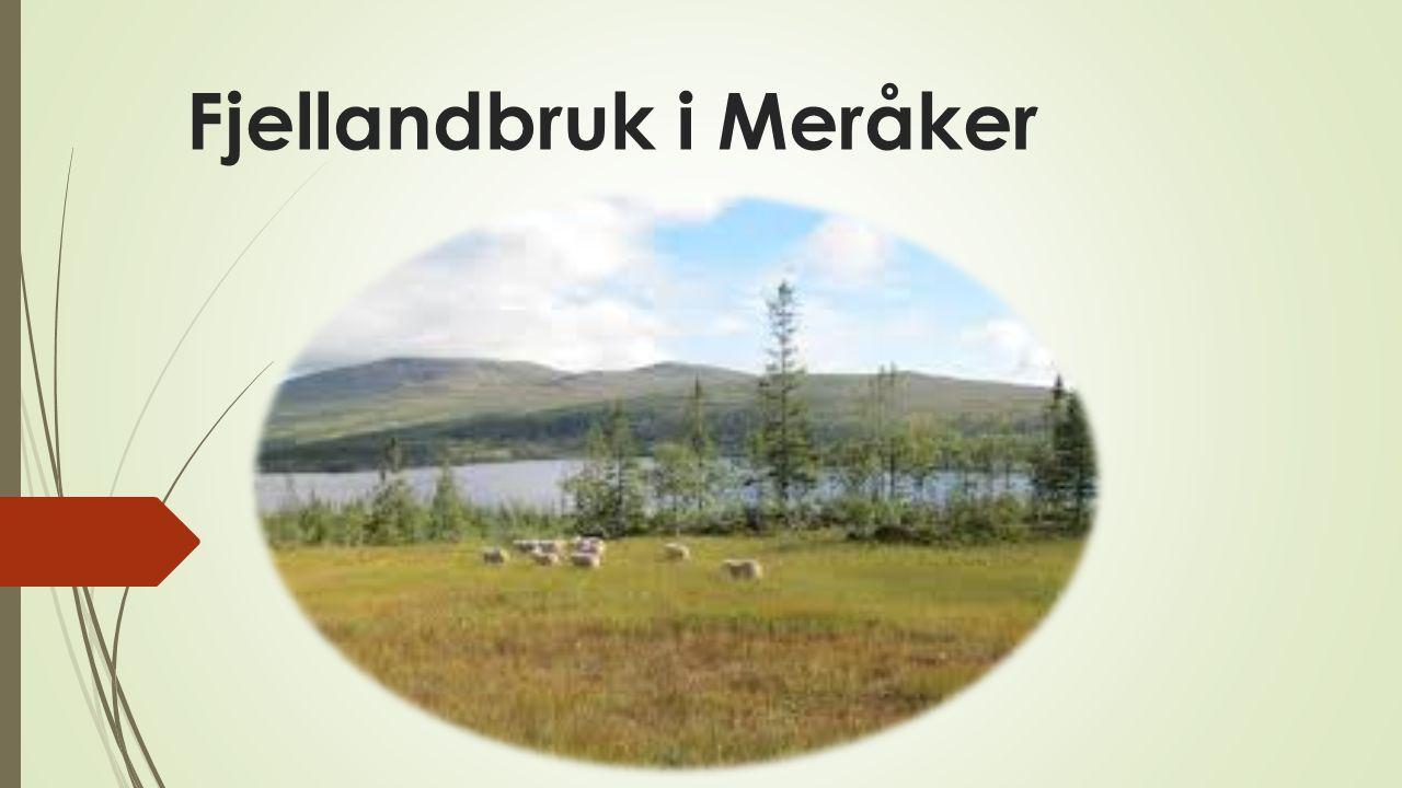 Fjellandbruk i Meråker