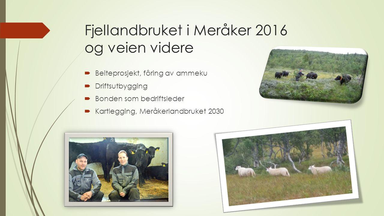 Fjellandbruket i Meråker 2016 og veien videre  Beiteprosjekt, fôring av ammeku  Driftsutbygging  Bonden som bedriftsleder  Kartlegging, Meråkerlandbruket 2030