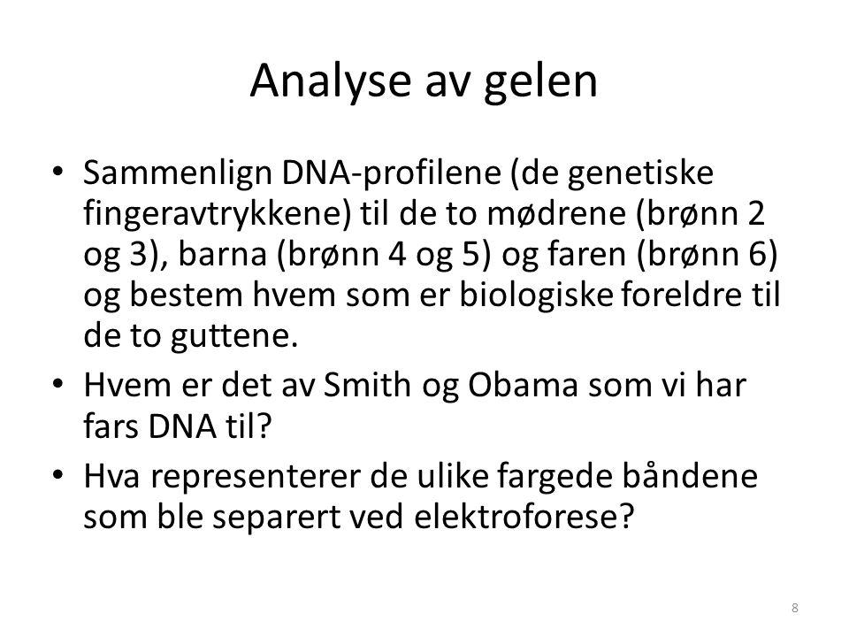 Analyse av gelen Sammenlign DNA-profilene (de genetiske fingeravtrykkene) til de to mødrene (brønn 2 og 3), barna (brønn 4 og 5) og faren (brønn 6) og bestem hvem som er biologiske foreldre til de to guttene.