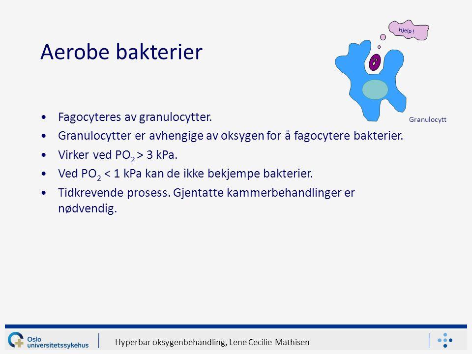 Hyperbar oksygenbehandling, Lene Cecilie Mathisen Aerobe bakterier Fagocyteres av granulocytter.