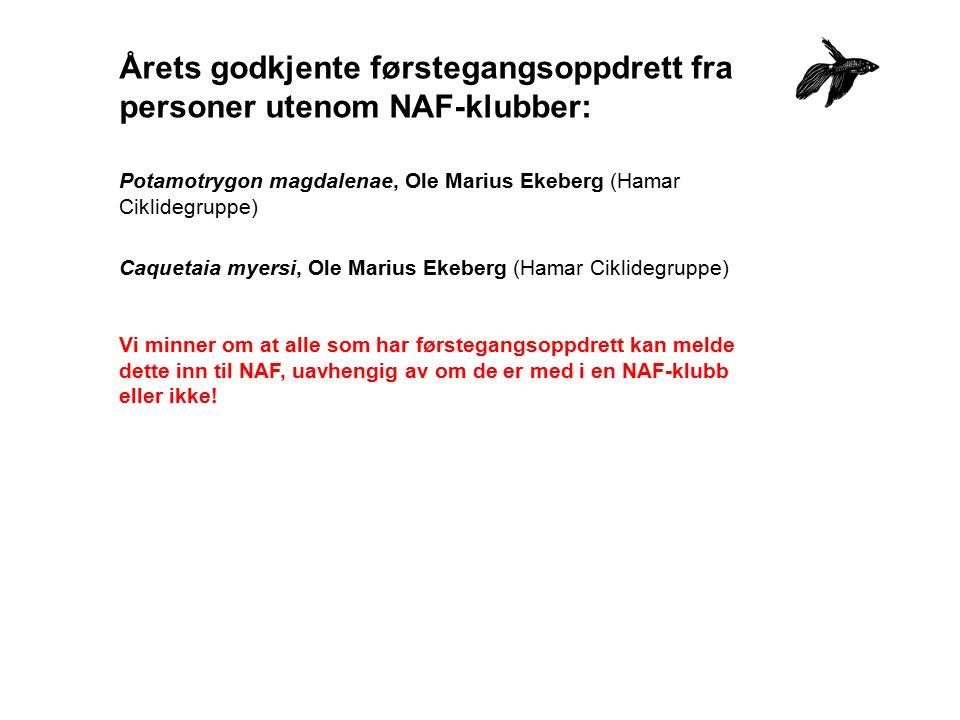 Årets godkjente førstegangsoppdrett fra personer utenom NAF-klubber: Potamotrygon magdalenae, Ole Marius Ekeberg (Hamar Ciklidegruppe) Caquetaia myers