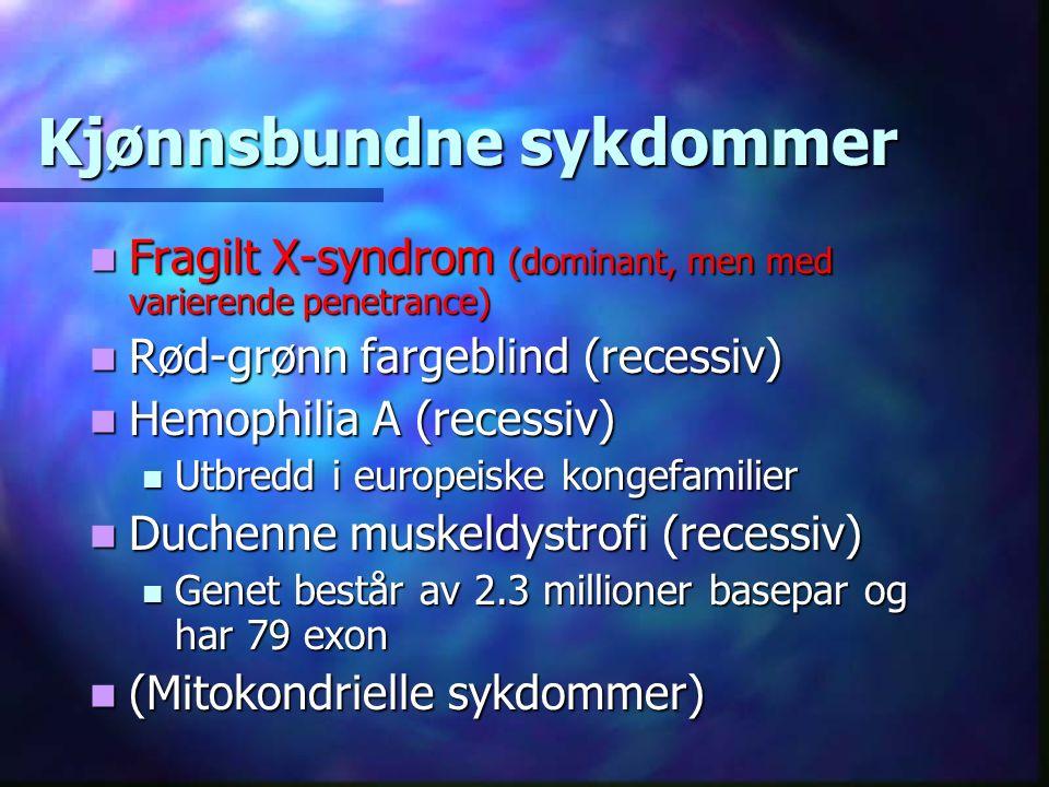 Kjønnsbundne sykdommer Fragilt X-syndrom (dominant, men med varierende penetrance) Fragilt X-syndrom (dominant, men med varierende penetrance) Rød-grønn fargeblind (recessiv) Rød-grønn fargeblind (recessiv) Hemophilia A (recessiv) Hemophilia A (recessiv) Utbredd i europeiske kongefamilier Utbredd i europeiske kongefamilier Duchenne muskeldystrofi (recessiv) Duchenne muskeldystrofi (recessiv) Genet består av 2.3 millioner basepar og har 79 exon Genet består av 2.3 millioner basepar og har 79 exon (Mitokondrielle sykdommer) (Mitokondrielle sykdommer)